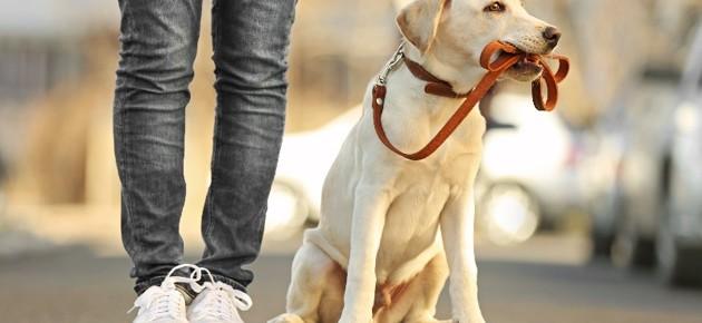 Balade partagée avec une personne DV et son chien guide - Bordeaux